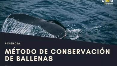 conservação de baleias