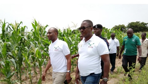 No record of maize imports this year, disregard claims – Dep. Minister