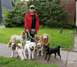 Dog walker and her dogs