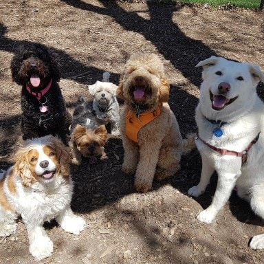 a happy group of dogs on their walk