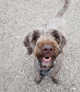 happy dog on his walk