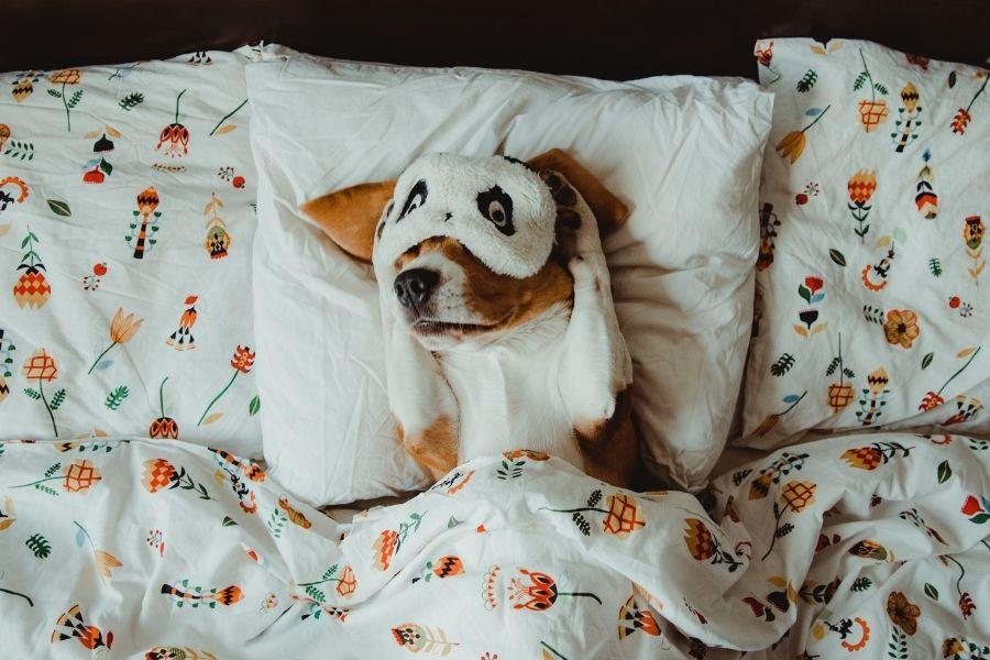 DOGS, SLEEP, AND COVID