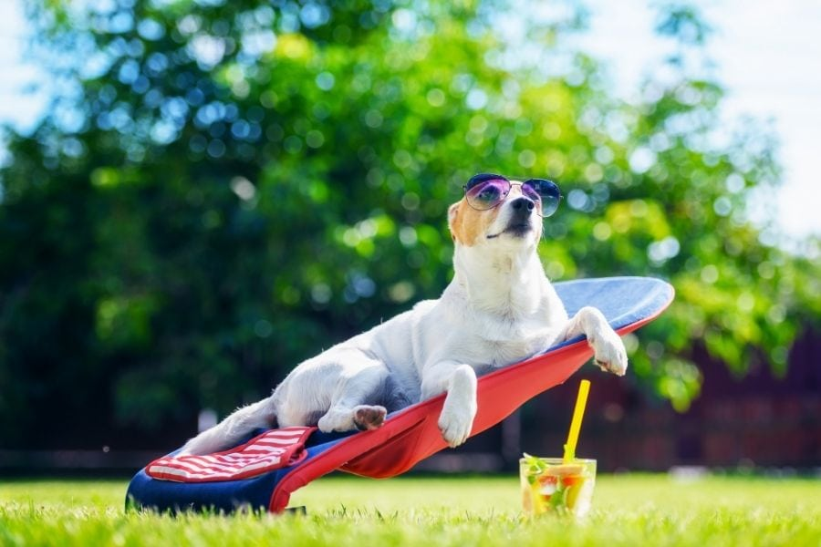 How to recognize Heat Exhaustion and Heat Stroke in Dogs