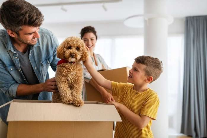 Importance of Pet Insurance