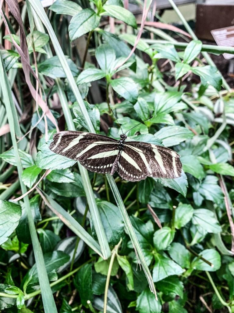 Hortus Botanicus Vlinder