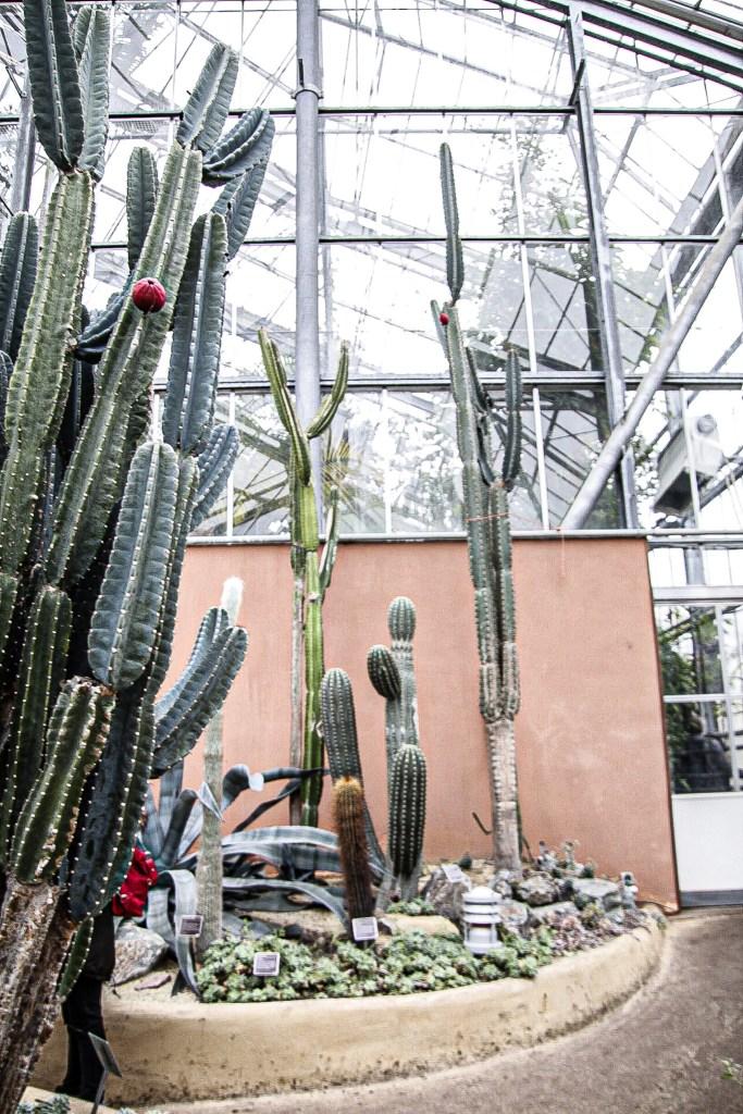 Hortus Botanicus Amsterdam Cactus woestijn