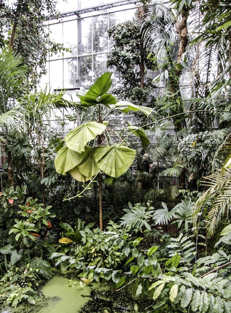 Hortus Botanicus Amsterdam tropische 3 klimatenkas