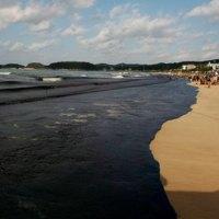 Marée noire sur la plage