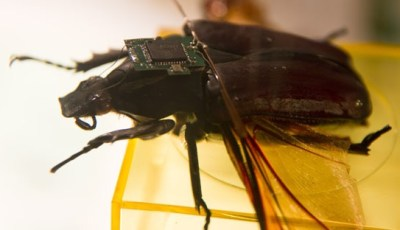 The Remote Radio Control of Millimeter-scale Insects in Flight