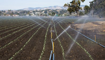 Robot-Assisted Precision Irrigation and Diagnostics