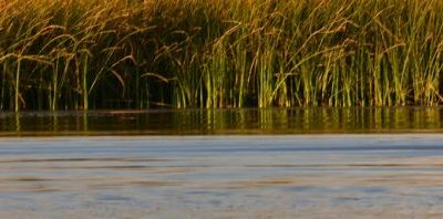 Evaluating California water management options