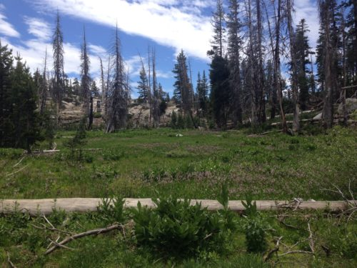 Fen meadow in Emigrant Wilderness, Stanislaus National Forest