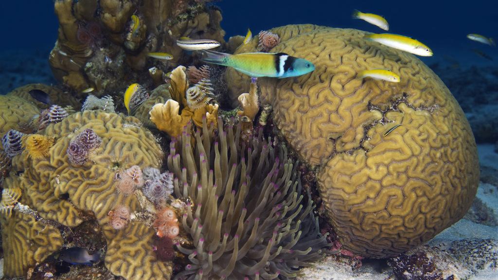Corallivorous Fish