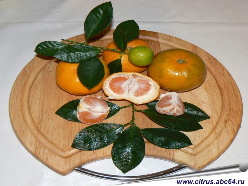 mandarinele te fac să pierzi în greutate kitul de pierdere în greutate amway