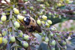 insecticides-bees