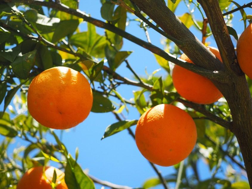 citrus microbiome