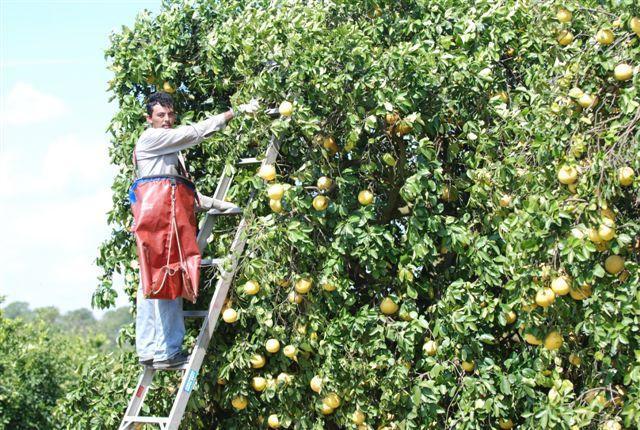 farm labor
