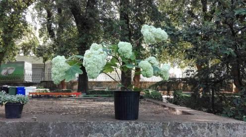 cittanova floreale 9