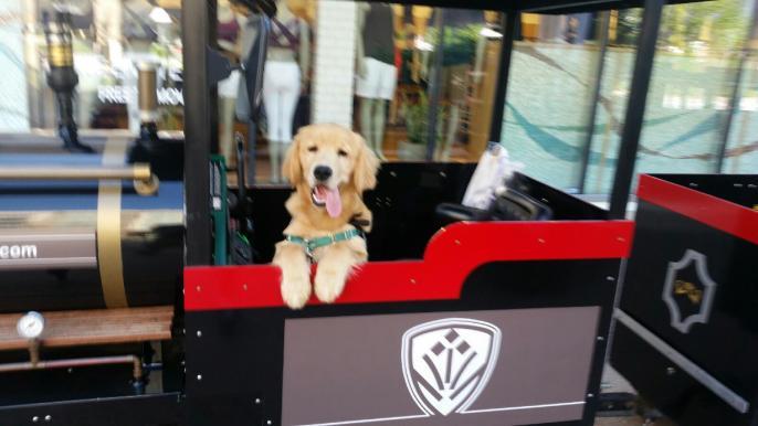 little-acorns-avalon-kids-activities-dog-in-train