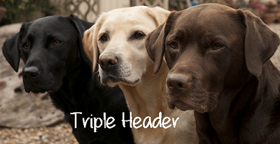 three dogs triple header 400x