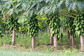 FG: Farmers to get four million fertilizers before end of the year