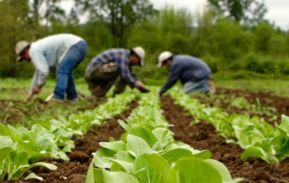 5,400 farmers, agro-dealers benefit from $3m USAID agric scheme