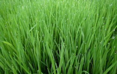 FG Trains Rice Farmers, Distributes Seedlings In Edo