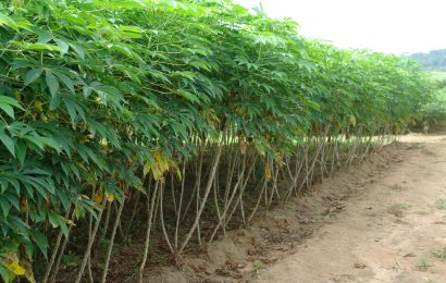 Nigeria Reduces Price Of Fertilizer