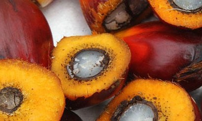 Industrialist Implores Youths On Palm Kernel Business