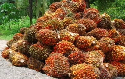 'Nigeria Can Earn $20b Annually From Oil Palm'
