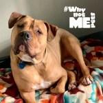 dog adoption washington