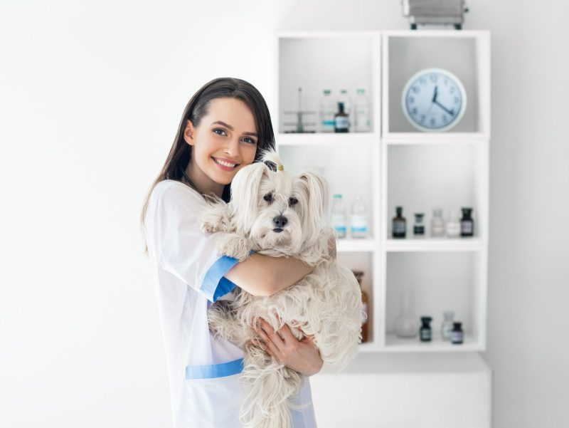 dog carried by a veterinarian