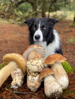 Mushroom picking with Dodger