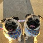 Emmett and Reggie