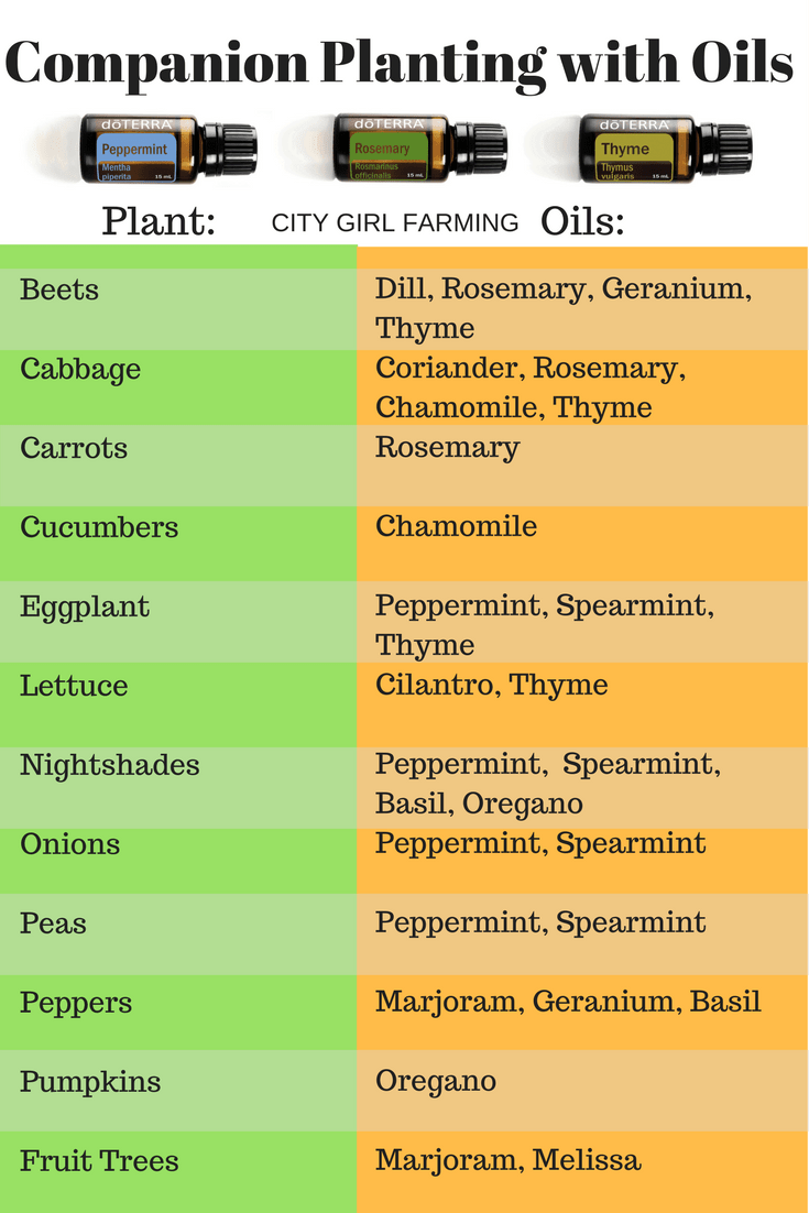 Companion Planting Mitre 10