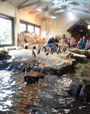 city-girl-vibe-x-two-oceans-aquarium-penguins