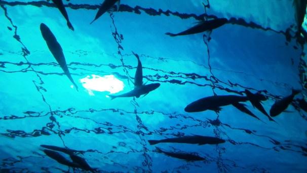 city-girl-vibe-x-two-oceans-aquarium-sharks