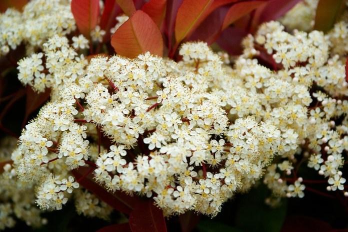 korallberkenye