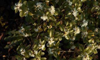 burkwood-illatcserje