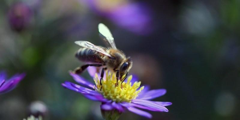 méh és virág