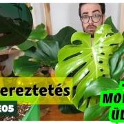 gyökereztetés - lets leaf