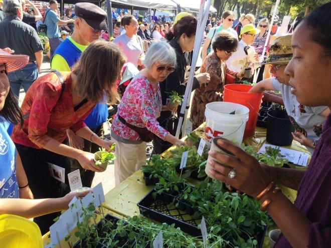 Community members plant seedlings with the ceremonial groundbreaking soil, October 3, 2015