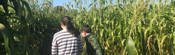 I Love Fall Outings: Mann Orchards' Corn Maze