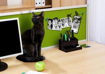 Mačje obešanke fotografij