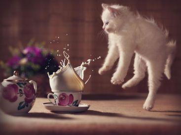 Jumping-Cats__880