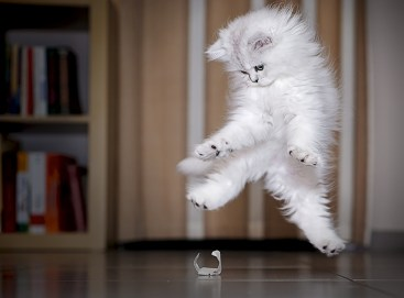 funny-jumping-cats-121__880