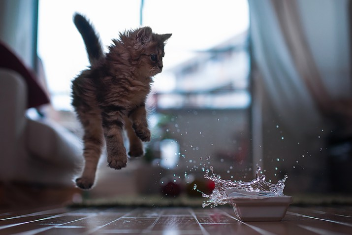 funny-jumping-cats-31__880