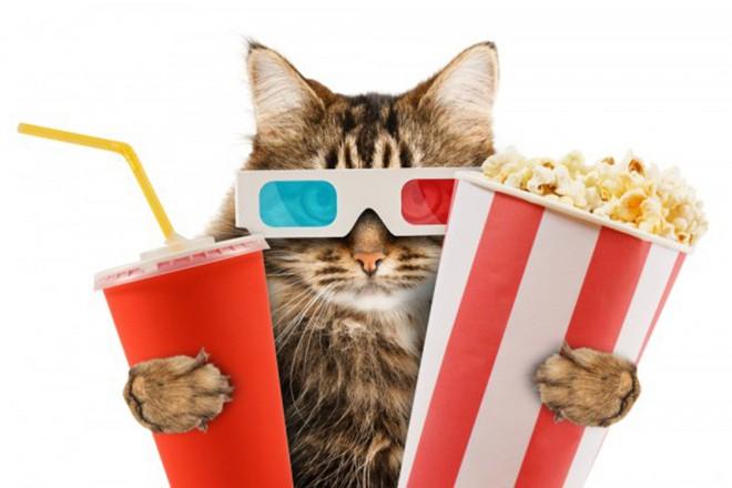 Bi šli v kino, kjer bi vam družbi delale mačke?