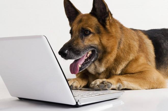 Psi imajo od 10-tisočkrat do 10-milijonkrat bolj občutljiv voh kot ljudje.