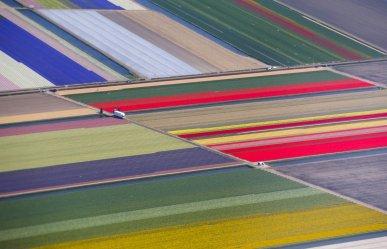 8. mesto: Zračni posnetek cvetličnih polj na Nizozemskem
